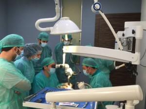 Curso de Cirugía plástica periodontal y su aplicación en Implantología
